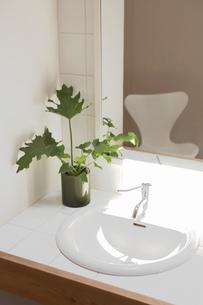 観葉植物を飾った洗面所の写真素材 [FYI02400239]