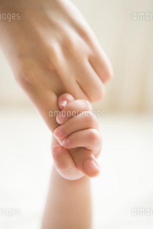 親子の手の写真素材 [FYI02403628]