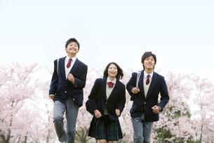 桜と走る男女学生3人の写真素材 [FYI02407990]