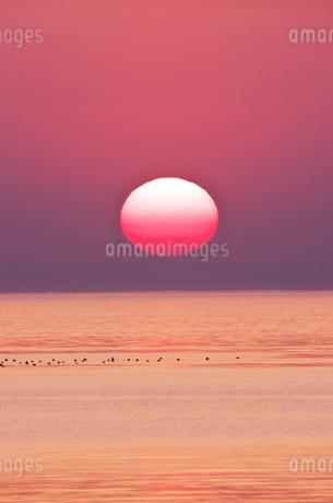 瀬戸内海(播磨灘)の夕陽の写真素材 [FYI02416371]