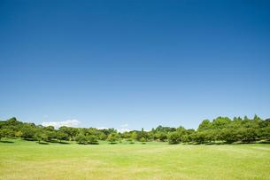 青空と芝生の公園の写真素材 [FYI02417294]