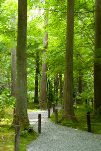 三千院の庭園の写真素材 [FYI02423942]