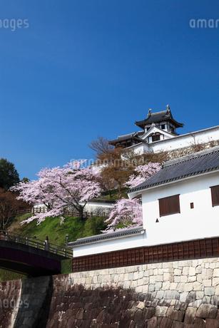 桜咲く福知山城の写真素材 [FYI02427748]