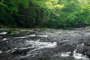 新緑の菊池渓谷の写真素材 [FYI02427755]