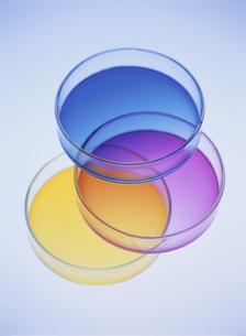 三色のシャーレの写真素材 [FYI02430455]