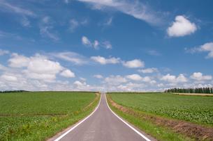 雲湧く空と一直線の道路の写真素材 [FYI02432735]