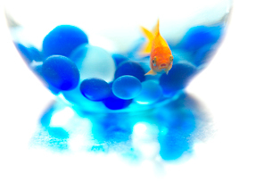 ガラスの器のなかの金魚とビー球の写真素材 [FYI02434255]