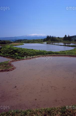水田と残雪の守門岳の写真素材 [FYI02435236]