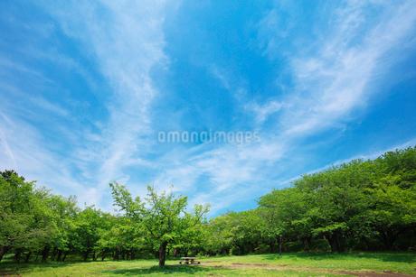 ピクニックテーブルと新緑の公園の写真素材 [FYI02435260]