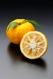 ゆず(柚子)の写真素材 [FYI02437022]