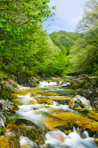 新緑の男鹿川の流れの写真素材 [FYI02437207]
