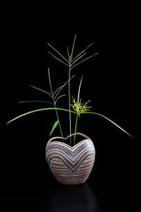 陶器の花瓶とオヒシバの写真素材 [FYI02437513]