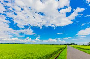 夏の稲田と道と雲と青空の写真素材 [FYI02437698]