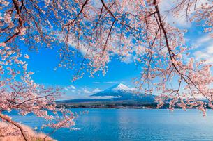 河口湖のサクラと富士山の写真素材 [FYI02437920]