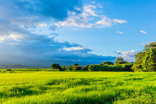 夏の夕方の稲田と雲の写真素材 [FYI02438073]