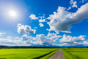 夏の稲田と道と太陽と青空の写真素材 [FYI02438164]