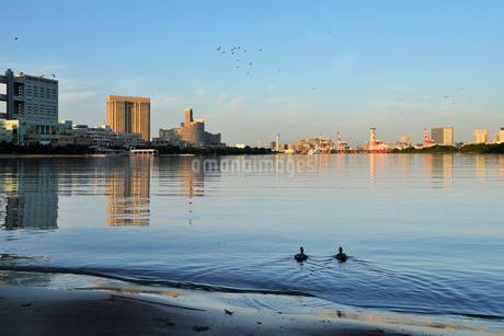 カルガモと早朝のお台場風景の写真素材 [FYI02446649]