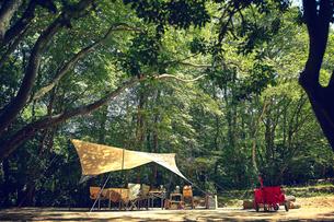 森に貼られたタープの写真素材 [FYI02448560]