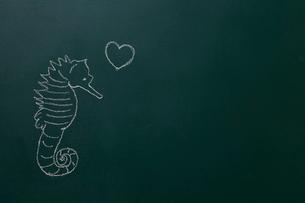 黒板に白いチョークで描いたタツノオトシゴのイラスト素材 [FYI02449357]