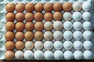 卵パックに並べられた卵のグラデーションの写真素材 [FYI02449922]