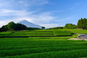 新茶畑と富士山の写真素材 [FYI02451119]