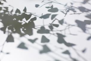 植物と影の写真素材 [FYI02452105]
