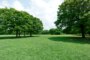青空と緑の公園の写真素材 [FYI02455945]