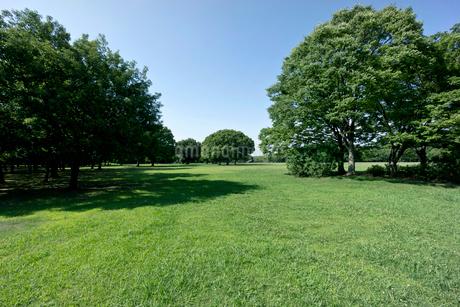 青空と緑の公園の写真素材 [FYI02455987]