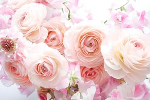 ラナンキュラスとスイートピーの花束の写真素材 [FYI02456753]