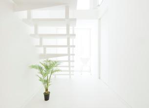 白い階段と観葉植物の写真素材 [FYI02457100]
