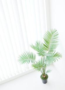 窓際にある観葉植物の写真素材 [FYI02457119]