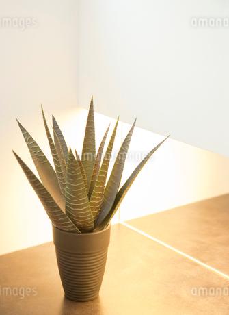 観葉植物の写真素材 [FYI02457179]