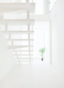 白い階段と観葉植物の写真素材 [FYI02457218]