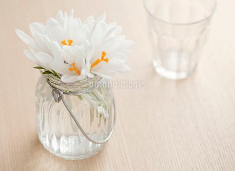 クロッカスの入った小瓶とコップの写真素材 [FYI02457343]
