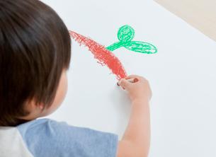クレヨンで双葉を描く男の子の写真素材 [FYI02457720]