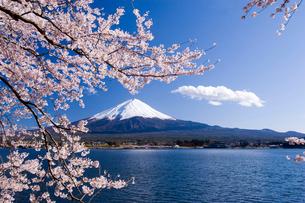 桜と富士山の写真素材 [FYI02458566]
