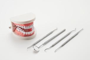 歯型模型と歯科ツールの写真素材 [FYI02459282]