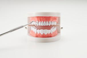歯型模型と歯科ツールの写真素材 [FYI02459334]