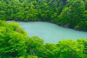 緑の森林に囲まれた青い淵の写真素材 [FYI02459671]