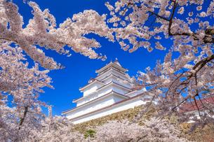 桜と鶴ヶ城の写真素材 [FYI02459696]