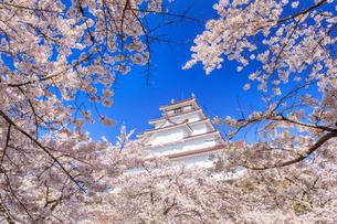 桜と鶴ヶ城の写真素材 [FYI02459966]