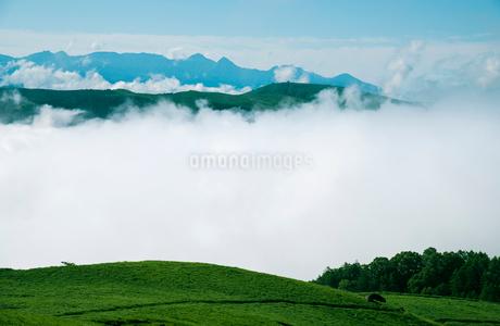 三峰山より望む雲海と八ヶ岳連峰霧ヶ峰高原の写真素材 [FYI02460762]