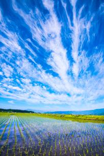 空の表情映す田植えの済んだ水田の写真素材 [FYI02461408]