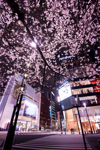 銀座数寄屋橋交差点より銀座の夜景と夜桜の写真素材 [FYI02461839]