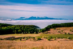 コナシ咲く踊場湿原と雲海に浮かぶ南アルプス連峰の写真素材 [FYI02462942]