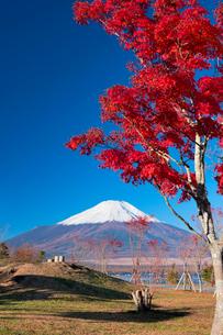 秋の富士山と山中湖の写真素材 [FYI02463252]