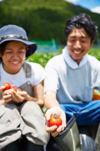 収穫したトマトを見て微笑む男女の写真素材 [FYI02465109]
