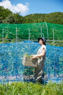畑で木箱を持って空を見上げる女性の写真素材 [FYI02465375]