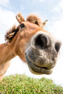 与那国馬の顔の写真素材 [FYI02465425]