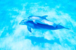 青い海を泳ぐイルカの写真素材 [FYI02465508]
